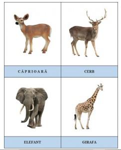 Carduri cu animale 3